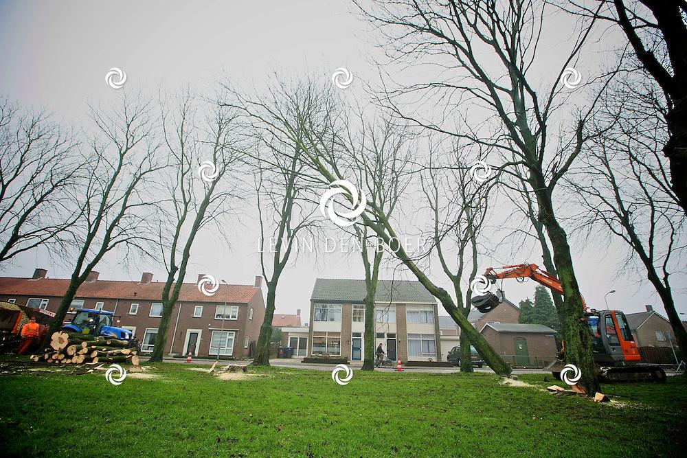 ZALTBOMMEL - Aan de Prins Bernhardweg worden diversen kastanjebomen gekapt. Volgens de gemeente zouden deze ziek zijn en worden daarom verwijderd. FOTO LEVIN DEN BOER - PERSFOTO.NU