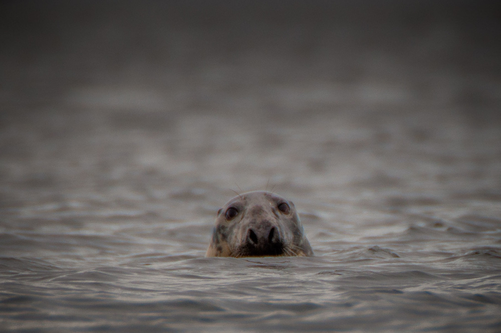 Seal Up for a Look, Castine, Maine, US