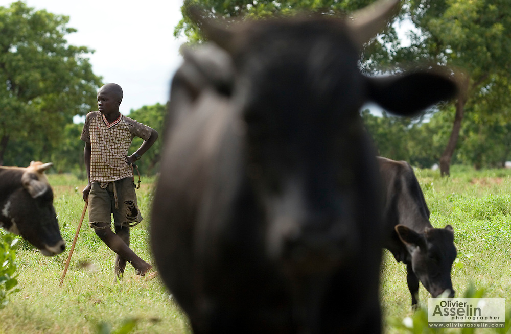 "Alhassan Niedow, 13, herds cattle near the village of Dungu after returning from school on Friday June 8, 2007. ""School is very far away,"" he says. "" I walk to the school, by the time I get there I'm tired."" Alhassan has four brothers and three sisters; he's the only one who attends school."