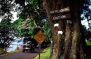 Drive slow sign, Hana coast, Maui, Hawaii<br />