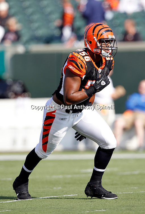 Cincinnati Bengals linebacker Roddrick Muckelroy (56) chases the action during the NFL week 8 football game against the Miami Dolphins on Sunday, October 31, 2010 in Cincinnati, Ohio. The Dolphins won the game 22-14. (©Paul Anthony Spinelli)