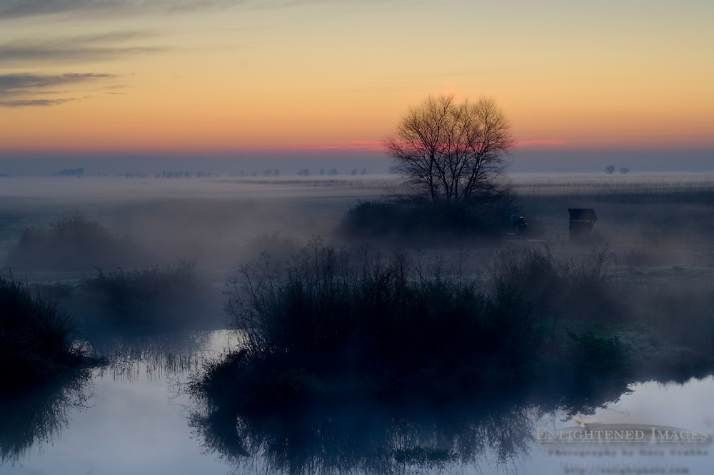 Misty morning ground fog over pond at sunrise in winter, Merced National Wildlife Refuge, Central Valley, California