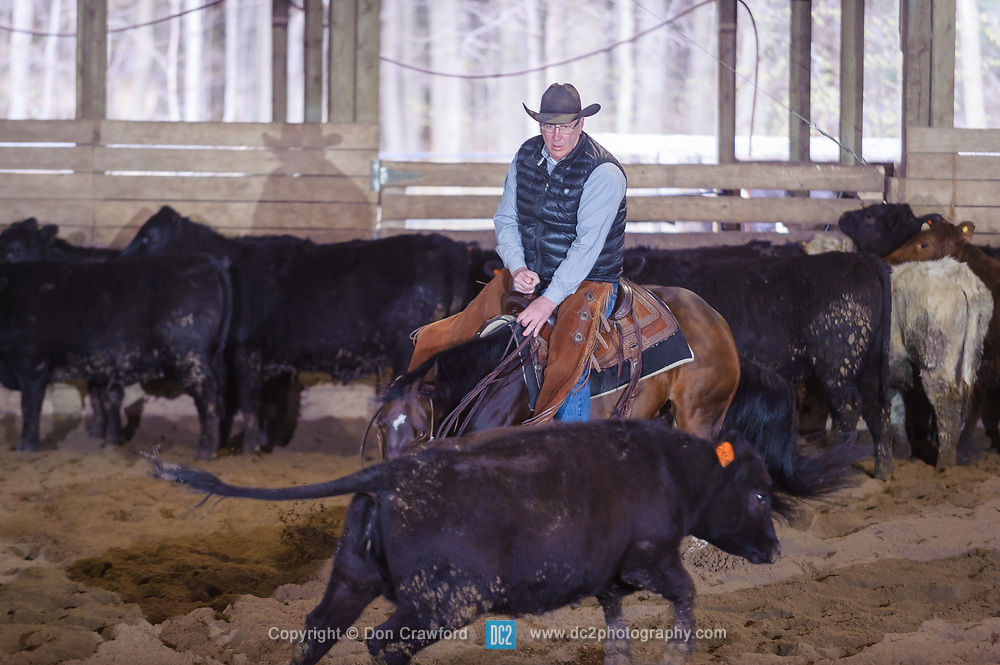 April 30 2017 - Minshall Farm Cutting 2, held at Minshall Farms, Hillsburgh Ontario. The event was put on by the Ontario Cutting Horse Association. Riding in the 5,000 Novice Horse Class is Shawn Minshall on Wild Little Cat owned by the rider.