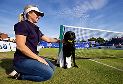 LIVERPOOL, ENGLAND - Saturday, June 23, 2018: Kate Finlay from Kates Doggy Boutique with Maggie who is acting as a ball girl during day three of the Williams BMW Liverpool International Tennis Tournament 2018 at Aigburth Cricket Club. (Pic by Paul Greenwood/Propaganda)