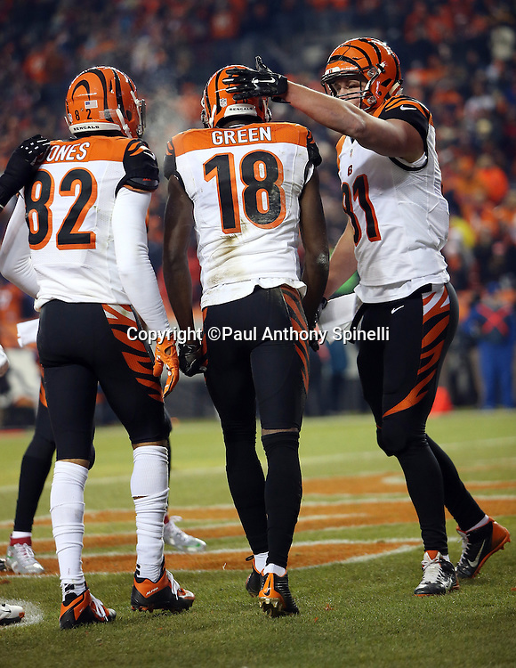 Cincinnati Bengals wide receiver A.J. Green (18) gets a pat on the helmet from Cincinnati Bengals rookie tight end Tyler Kroft (81) after catching a first quarter pass good for a 7-0 Bengals lead during the 2015 NFL week 16 regular season football game against the Denver Broncos on Monday, Dec. 28, 2015 in Denver. The Broncos won the game in overtime 20-17. (©Paul Anthony Spinelli)