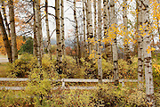 A white fence through a stand of autumn trees. On the grounds of the Cataldo Mission in Shoshone County, Idaho. PLEASE CONTACT US FOR DIGITAL DOWNLOAD AND PRICING.