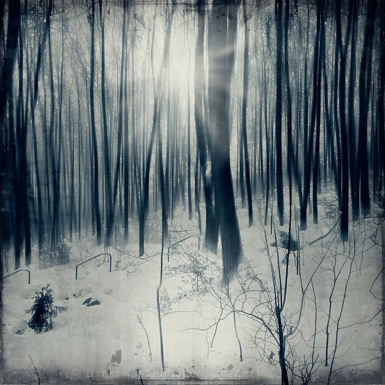 Cold and pale sun shining through a wintry forest<br />