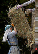 BETHLEHEM, CT- 11 OCTOBER 2005- Sister Alma Egger hoists a 40-50 lb. bale of hay in one of the 12 hay fields at the Abbey of Regina Laudis in Bethlehem. The abbey produces about 6,000 bales of hay per season to feed their livestock.   (Photo by Robert Falcetti)