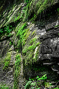 A spring spreads and drips across the steep rock walls along the north end of the Linville Gorge Trail.