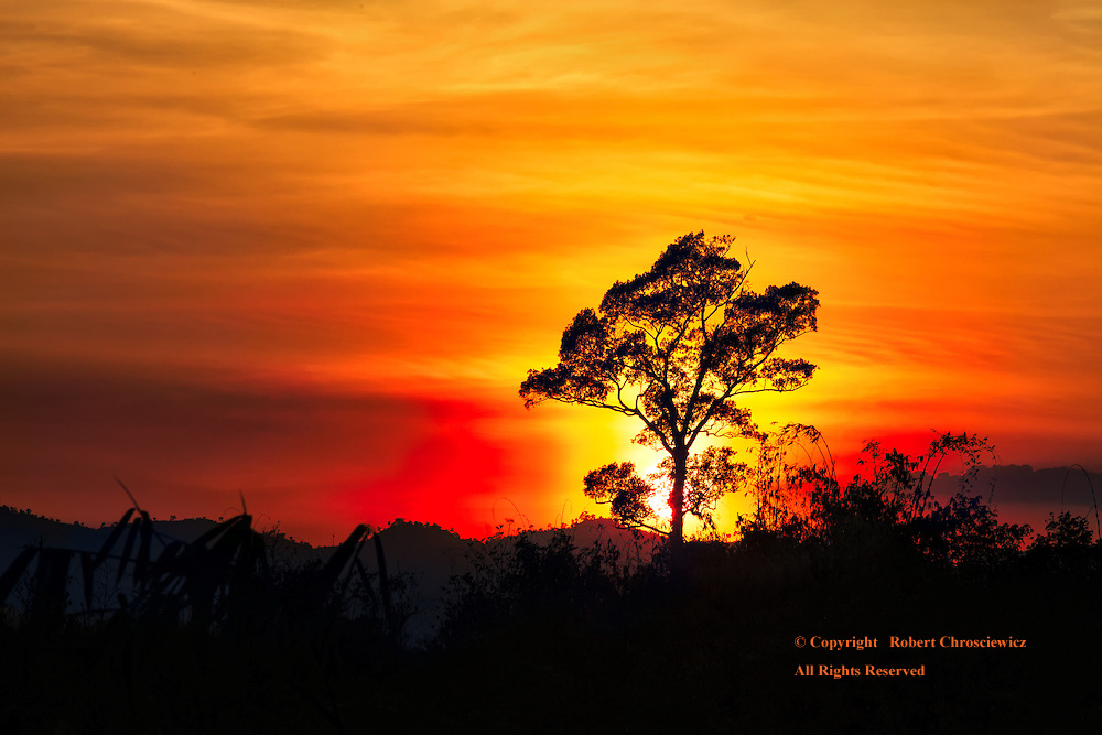 The sky explodes into a fiery display as the sun hides behind a lone tree as it sets upon the Burma border, San Khla Buri Thailand.