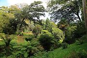 Glendurgan Garden, Cornwall, England, UK