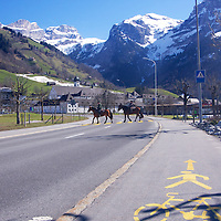A beautiful Sunday morning in Engelberg for horse riding
