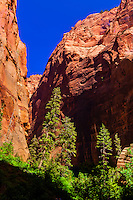Taylor Creek Trail, Kolob Canyon, Zion National Park, Utah USA.