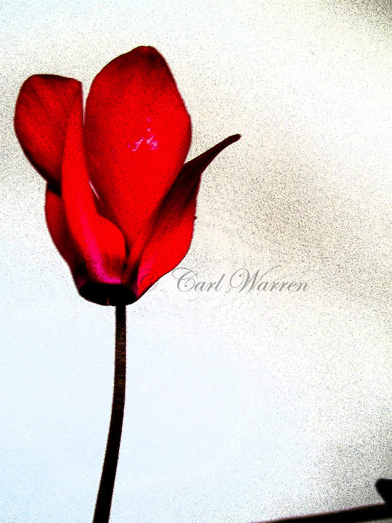 Photography web site