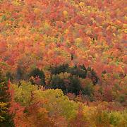 Peak autumn color in Crawford Notch NH