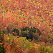 Peak autumn color in Crawford Notch NH