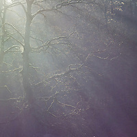 Strongly backlit trees with lens flare