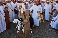 Sultanat d'Oman, gouvernorat de Ad-Dakhiliyah, Nizwa, le marché aux bestiaux du vendredi //Sultanate of Oman, Ad-Dakhiliyah Region, Nizwa, friday cattle market