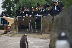 """His Majesty the King of Norway's Guard paid a very special visit to RZSS Edinburgh Zoo to bestow a unique honour upon our resident king penguin Sir Nils Olav. Already a knight, the most famous king penguin in the world was given the new title of """"Brigadier Sir Nils Olav"""".(c) Brian Anderson 
