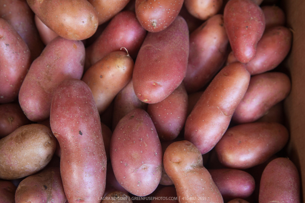 French Fingerling Heirloom Potatoes at a farmers market
