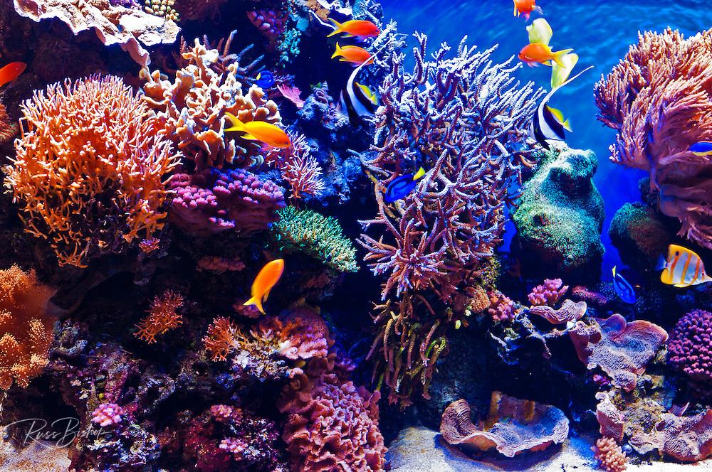 Tropical fish tank, Monterey Bay Aquarium, Monterey, California