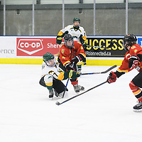 1st year forward Jenna Grube (7) of the Regina Cougars in action during the Women's Hockey home game on November 18 at Co-operators arena. Credit: Arthur Ward/Arthur Images