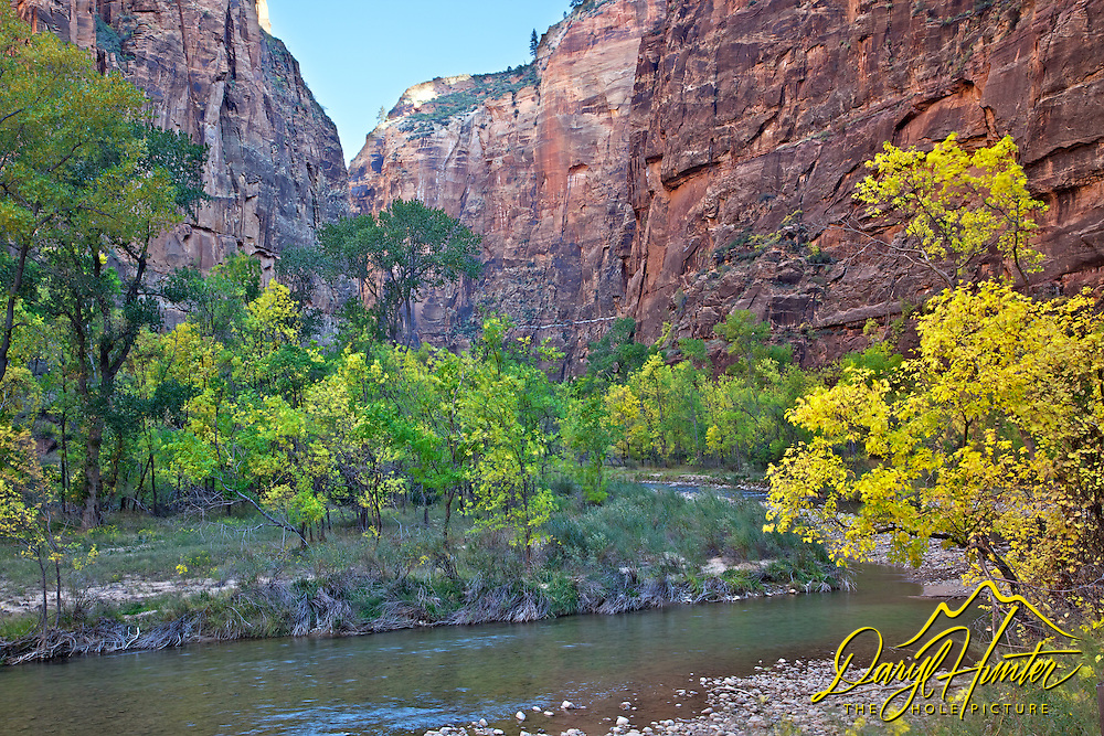 Virgin River, Fall Colors, Zion Canyon, Zion National Park