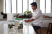 Ith Saveng, Curator and Scholar researcher at the Royal University of Phnom Penh catalogs rare preserved animal specimens including a Siamese Crocodile baby preserved along with its shell after coming out of the shell the wrong way and suffercating. It is now the only preserved specimen of a Siamese Crocodile baby in Cambodia..The 21st century was a good year for the Siamese Crocodile. In 2000 after being declared extinct in the wild they were 're-discovered' in the remote Cardamon Region of Cambodia. Then in June 2010 a nest of eggs was found by a team run by Fauna and Floras International (FFI), a British NGO, one of the world's oldest. 15 eggs were taken to safety and 10 successfully hatched in a 'fake' nest guarded by FFI staff. .Since that 2000 discovery much work has been done to find and research this critically endangered reptile. It is now believed that around 250 Siamese Crocodile are alive in the wild, the majority of which are in the Cardamon Mountains, down from tens of thousands before man started hunting them and encroaching on their habitat. .After successfully doing DNA tests to find 'pure blood' Siamese Crocs rather than those who have been cross-bred they plan to work with a breeding centre that will lead to the crocodiles being released back in to the wild.