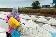 24 APRIL 2013 - SAMUT SONGKHRAM, SAMUT SONGKHRAM, THAILAND:    A worker piles salt into a wheelbarrow before hauling it to an area where it will be bagged and weighed. The 2013 salt harvest in Thailand and Cambodia has been impacted by unseasonably heavy rains. Normally, the salt fields are prepped for in December, January and February, when they're leveled and flooded with sea water. Salt is harvested from the fields from late February through May, as the water evaporates leaving salt behind. This year rains in December and January limited access to the fields and rain again in March and April has reduced the amount of salt available in the fields. Thai salt farmers are finishing the harvest as best they can, but the harvest in neighboring Cambodia ended 6 weeks early because of rain. Salt has traditionally been harvested in tidal basins along the coast southwest of Bangkok but industrial development in the area has reduced the amount of land available for commercial salt production and now salt is mainly harvested in a small part of Samut Songkhram province.   PHOTO BY JACK KURTZ