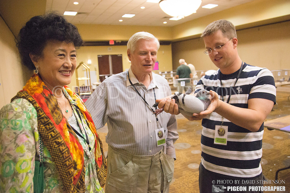 Jennifer Ling Rankin and her husband George Rank look over their new bird, Belg-2013-4176425, a son of New Freddy purchased for $9,500 and bred by Nikolaas Gyselbrecht, right, of the Pipa Elite Center, after the AU Convention pigeon auction held by the Gulf Coast Homing Club in Tampa, Fl., on Saturday, November 23, 2013. Nikolaas Gyselbrecht of the Pipa Elite Center is at right. Photo by David Stephenson
