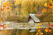 Small ducks house in the lake