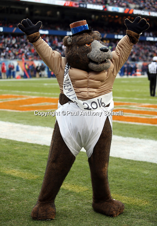 The Chicago Bears mascot wears a New Year's diaper costume as he waves his arms in the end zone grass during the Chicago Bears NFL week 17 regular season football game against the Detroit Lions on Sunday, Jan. 3, 2016 in Chicago. The Lions won the game 24-20. (©Paul Anthony Spinelli)