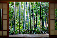 Japan Kyoto Okochi Denjiro bamboo grove seen from Tea House