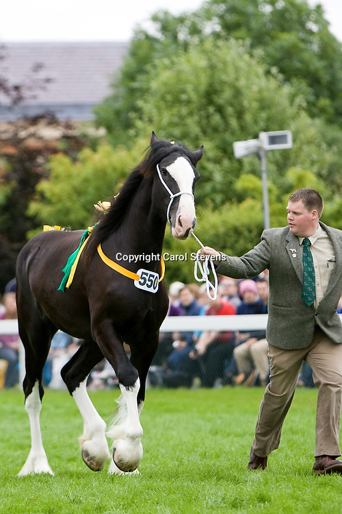 Great Yorkshire Show 2010<br />