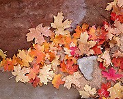 Signs of fall color in Zion Nationa Park
