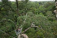 Scott Wallace on the canopy walkway at the canopy tower at the Tiputini Biodiversity Station, Orellana Province, Ecuador