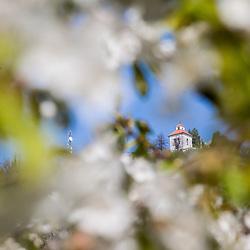 20180418: SLO, Nature - Šmarna gora / Mount Saint Mary above Ljubljana