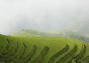 Rice Terrace - Longsheng