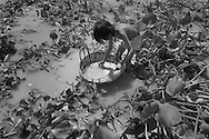 Floating village southwest of Pursat near Tonle Sap.<br />