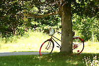 Red bicycle leans against tree, Saint- Sauveur, Quebec