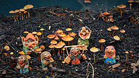 Troll Family Autumn Mushroom Jamboree. Composite of 20 focus stacked images taken with a Fuji X-H1 camera with a 56 mm f/1.2 lens (ISO 200, 56 mm, f/2.8, 1/125 sec). Raw images processed with Capture One Pro and Helicon Focus (Method A, R8, S4).