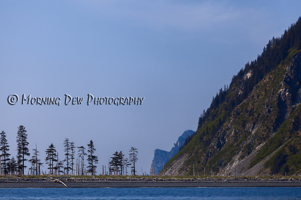 A line of trees cling tenuously to life at Sandspit Point State Marine Park, Fox Island, Resurrection Bay, Alaska