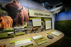 One of the exhibits at the recently opened $24.4 million Flint Hills Discovery Center, located in Manhattan, Kansas, is about dung beetles. In this interactive exhibit visitors lift a cow chip to expose a photo of dung beetles at work. Through interactive exhibits, Flint Hills Discovery Center visitors can explore the science and cultural history of the last stand of tallgrass prairie in North America – one of the world's most endangered ecosystems. Other attractions of the Flint Hills Discovery Center include: a 15-minute 'immersive experience' film which has special effects such as fog, mist and wind which appear in the theater as the high definition film is shown on a large panoramic screen; an 'underground forest' depicting the long roots of prairie plants including the 7-foot roots of bluestem prairie grass; explanations of importance of fire to the Flint Hills tallgrass prairie; and exhibits about the people and cultural history of the Flint Hills. The Flint Hills Discovery Center was designed by the museum architectural firm Vern Johnson Inc. with interpretive design and planning by Hilferty and Associates. The 34,900 square foot science and history learning center features permanent interactive exhibits, temporary exhibits, and areas for community programs and outreach activities. The Flint Hills Discovery Center received a LEED green building certification for their environmental design and energy efficiency, including their lighting and geothermal heating/cooling system.