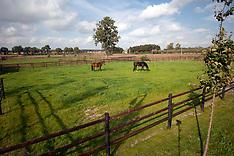 Studfarm de Begijnhoeve 2011