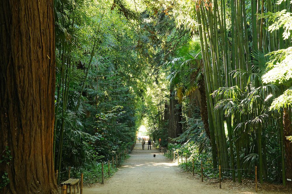 France, Languedoc Roussillon, Gard, Cevennes, Anduze, Prafrance, allée d'entrée, bambous et séquoias