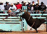 Xavier Mascareñas/The Daily Times; Michael Montague of Standing Rock, N.M., rides 'Slammin Sosa' during the bull-riding portion of the rodeo at the 97th Annual Shiprock Navajo Fair on Oct. 5, 2008.