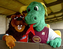KETTERING TOWN CHAMP THE LION, POSES WITH NORTHAMPTON TOWNS CLARENCE THE DRAGON, IN THE STABLE, OUT OF THE RAIN, John Smiths Mascot Grand National, Huntingdon Racecourse Sunday 5th October 2008
