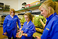 Students at Bishop Burton College, East Yorkshire. Animal management students handle tree frogs in the Animal Management centre. LtoR Charlote Greef, Hannan Armstrong, Abigale Sykes.
