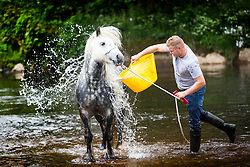 © Licensed to London News Pictures. 09/06/2017. Appleby UK. A traveller washes his horse at the Appleby horse fair that is taking place in the village of Appleby, the annual event dates back to the 18th century & see's travellers wash their horses in the River Eden. Photo credit: Andrew McCaren/LNP