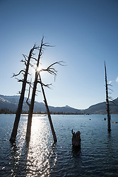 """Lake Aloha 12"" - Photograph of dead trees at Lake Aloha in the Tahoe Desolation Wilderness."